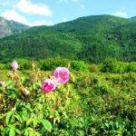 vallée des roses maroc