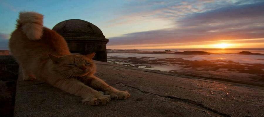 voyager au maroc avec un animal